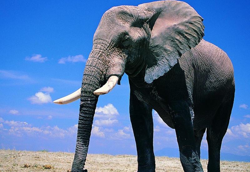 """Ужас в зоопарке Марокко: слон убил 7-летнюю девочку <span class=""""color_red"""">- ВИДЕО</span>"""