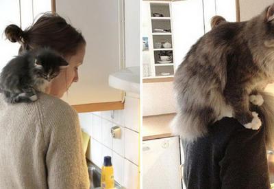 """15 фотографий котов до и после того, как они выросли <span class=""""color_red"""">- ФОТО</span>"""