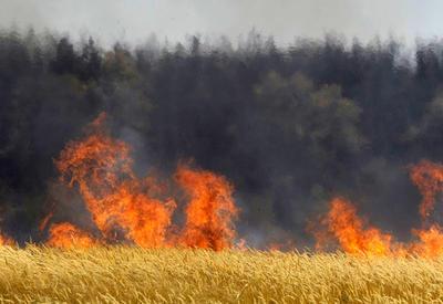 Еще одна армянская провокация: подожжены пастбища в Товузе