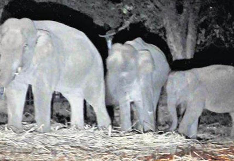В Индии поезд врезался в стадо слонов