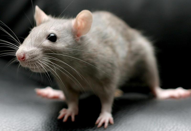 Мышь задержала авиарейс во Франции на 48 часов
