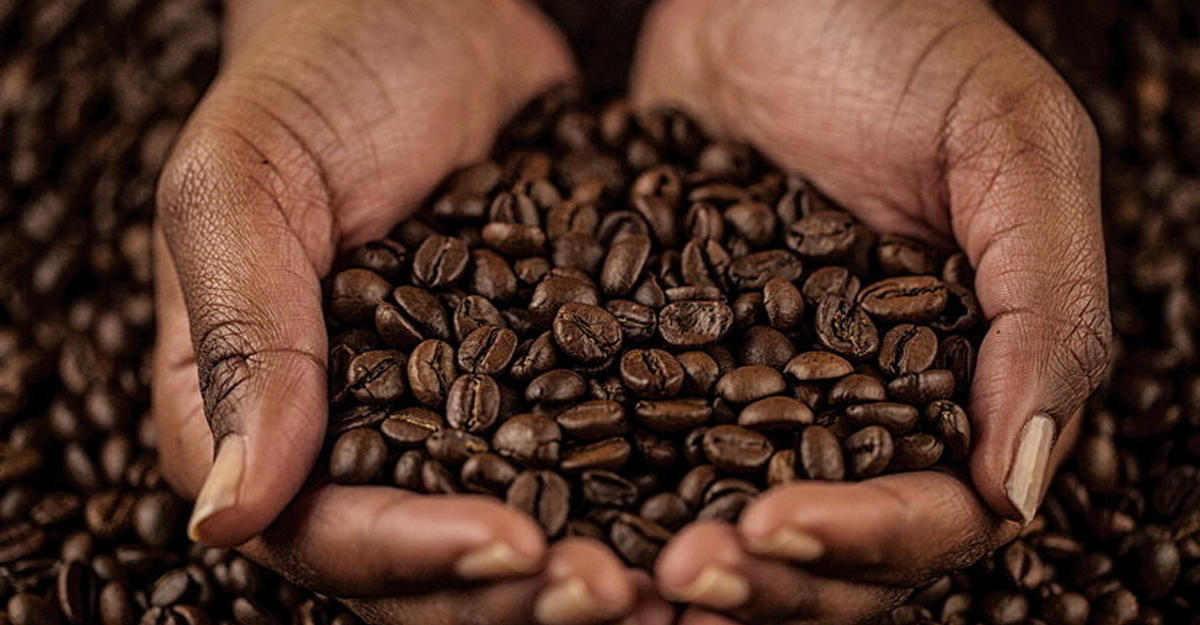 Плохая новость: ученые сообщили, что кофе напланете вскором времени завершится