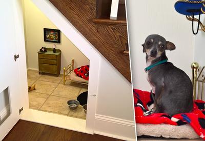 """Собака, у которой есть комната в стиле Гарри Поттера <span class=""""color_red"""">- ФОТО</span>"""