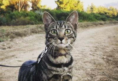 """История о котенке из приюта, который полюбил путешествовать <span class=""""color_red"""">- ФОТО</span>"""