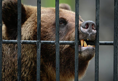 Медведица в польском зоопарке откопала снаряд