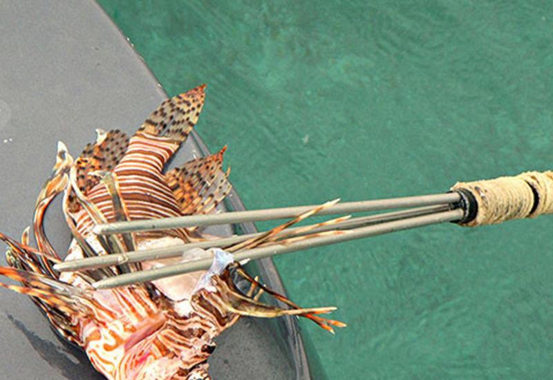"""Создан пистолет для подводного отстрела опасных рыб <span class=""""color_red"""">- ВИДЕО</span>"""