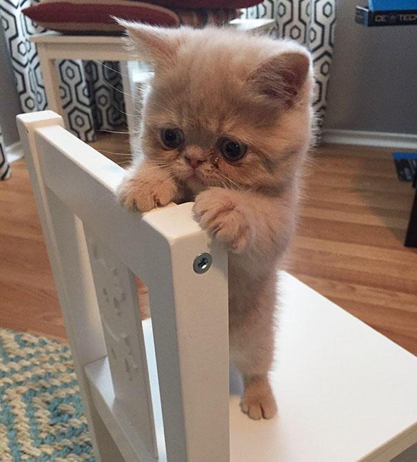 Картинки по запросу 20 самых милых котят на свете
