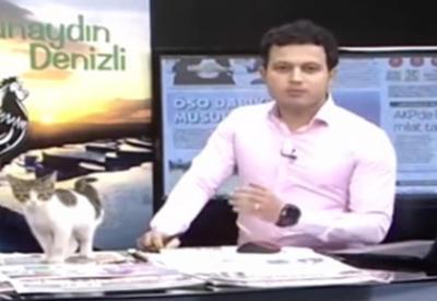 """Неожиданный гость во время прямого эфира на турецком канале <span class=""""color_red"""">- ВИДЕО</span>"""