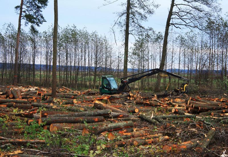 В Азербайджане ужесточат наказание за вырубку лесов