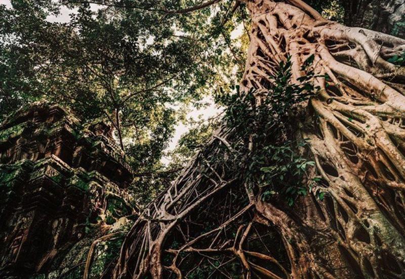 """Мистические фотографии заброшенных храмов в Камбодже <span class=""""color_red"""">- ФОТО</span>"""