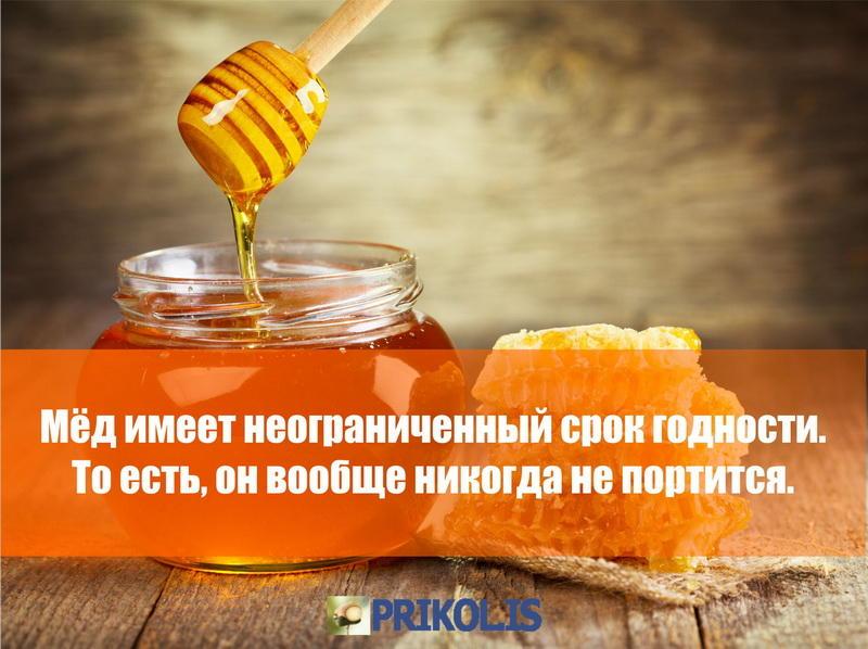 мёд никогда не портится профили людей