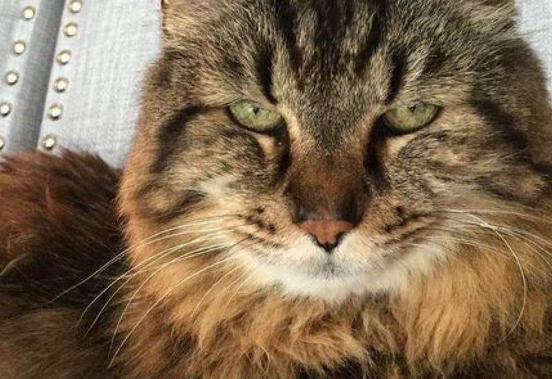 """В США пропал самый старый кот в мире <span class=""""color_red"""">- ФОТО</span>"""