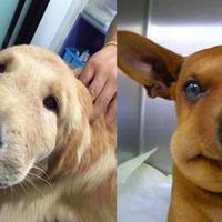 """Собаки, которые съели пчелу и очень об этом жалеют <span class=""""color_red"""">- 17 ФОТО</span>"""