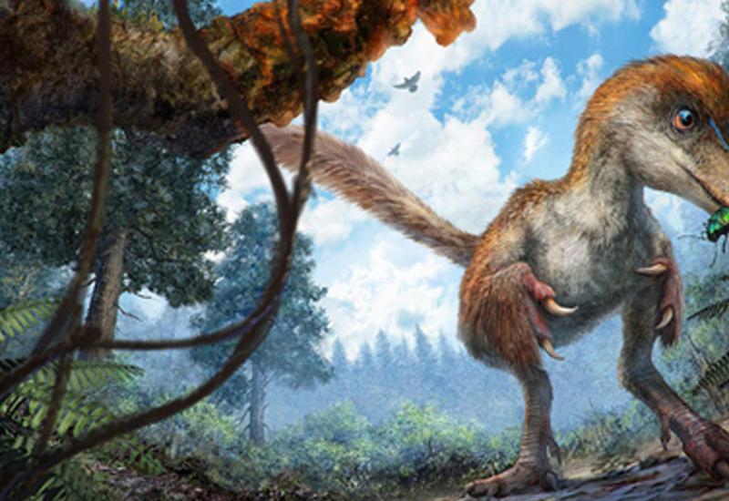"""Ученые нашли хвост динозавра, покрытый перьями <span class=""""color_red"""">- ВИДЕО</span>"""
