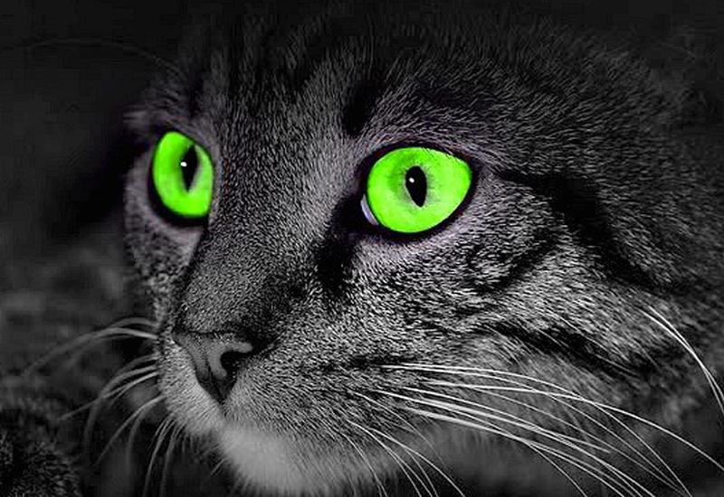 """Как животные видят окружающий нас мир <span class=""""color_red"""">- ВИДЕО</span>"""