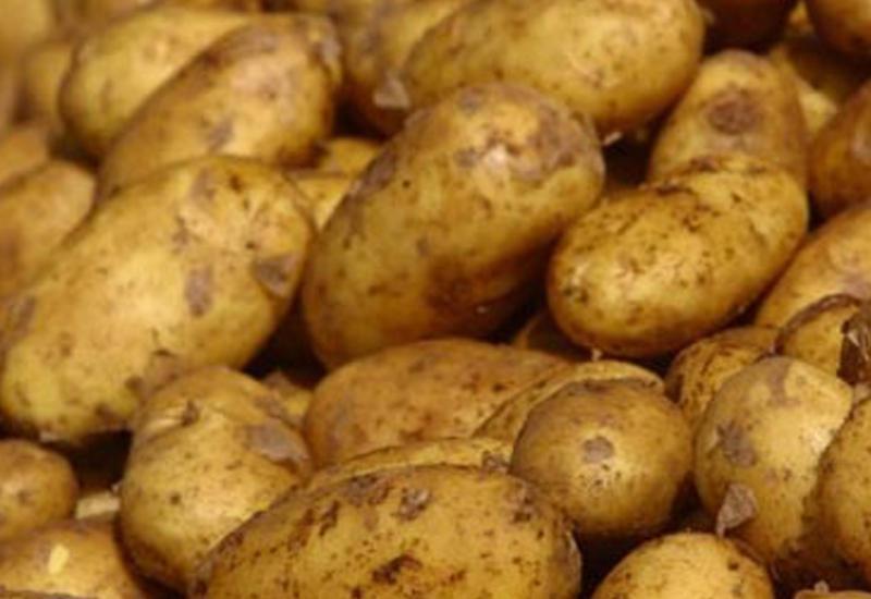 Azərbaycan özünü kartofla tam təmin edəcək