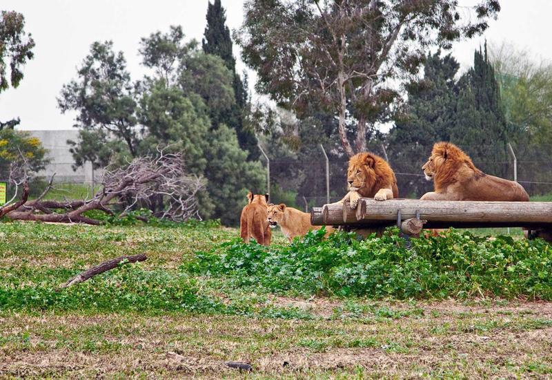 В Дубае откроется сафари-зоопарк стоимостью $270 млн
