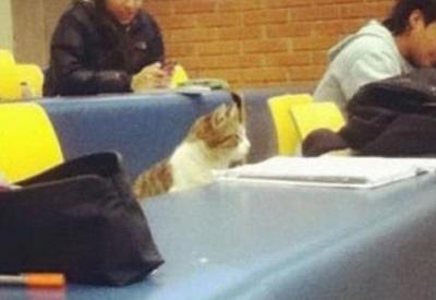 """19 мест, в которых не должно было быть кота, но вот он <span class=""""color_red"""">- ФОТО</span>"""
