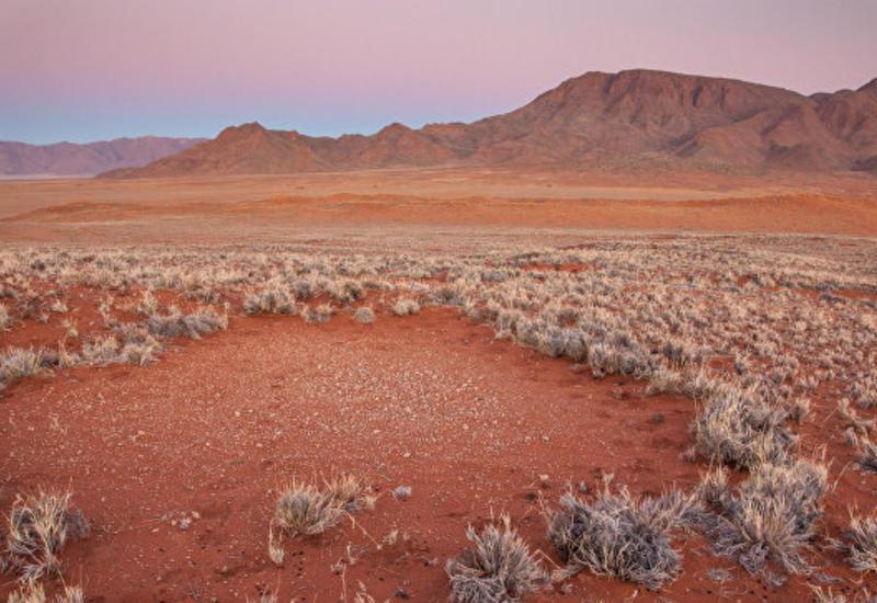 """Ученые выяснили, кто чертит загадочные """"круги на траве"""" в Африке"""