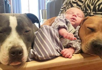4 собаки и кошка, ухаживающие за новорождённым, растрогали пользователей Интернета - 10 ФОТО