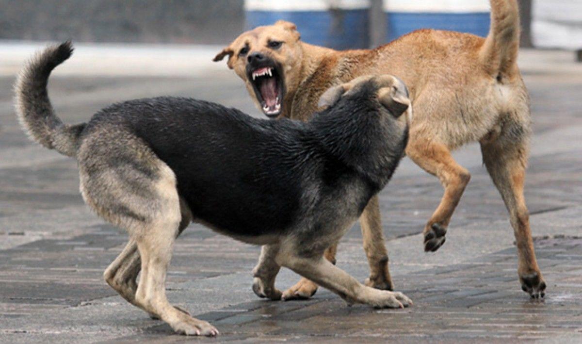 Вцентральной части Москвы собаки растерзали пенсионерку