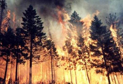 В Исмаиллы в лесу произошел пожар