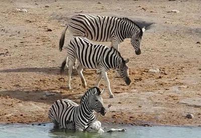 """Неожиданный инцидент в национальном парке Намибии <span class=""""color_red"""">- ВИДЕО</span>"""