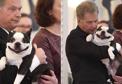 "Улыбчивая собака президента Финляндии покорила Интернет <span class=""color_red"">- ФОТО</span>"