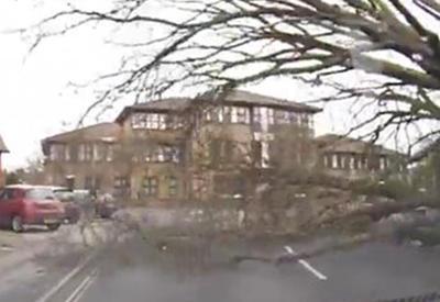 """Водитель чудом избежал падения огромного дерева на его машину <span class=""""color_red"""">- ВИДЕО</span>"""