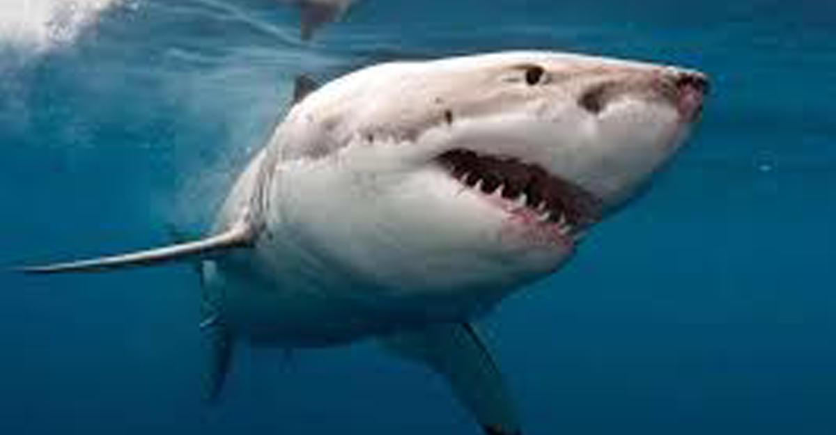 Акула едва ненапала насерфера впроцессе охоты