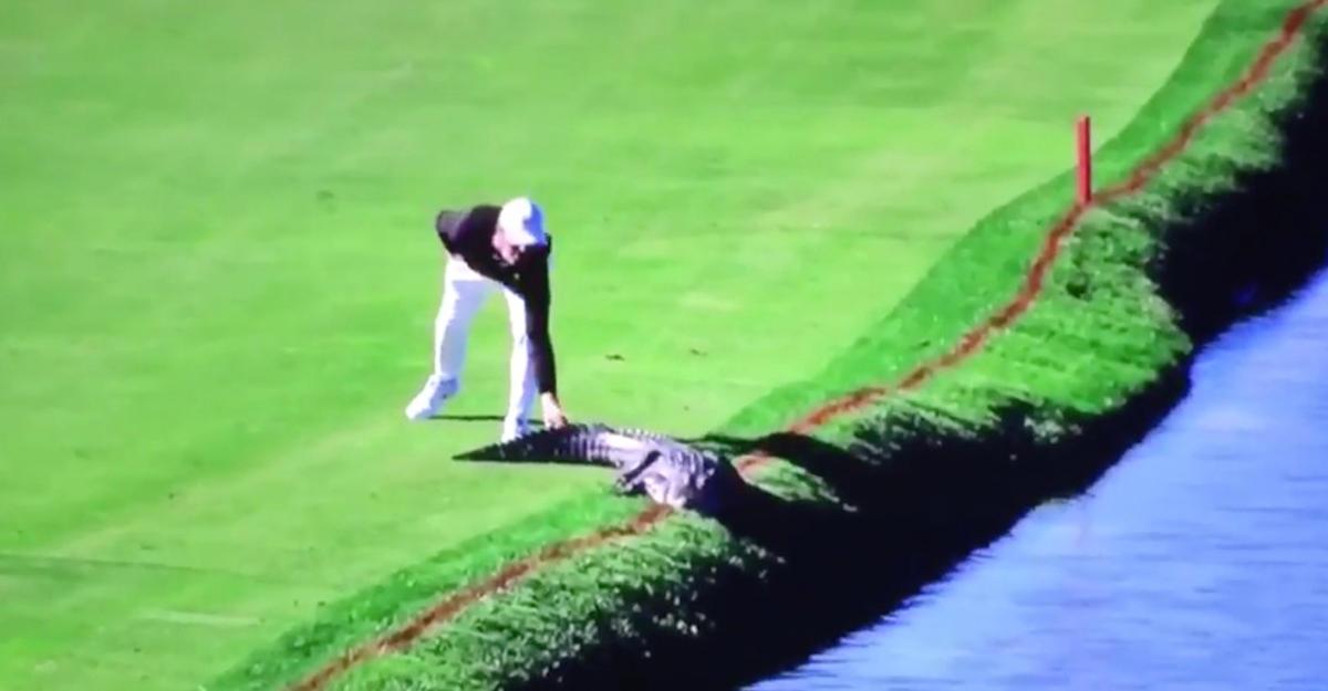 Страшное зрелище: американец прогнал аллигатора споля для гольфа