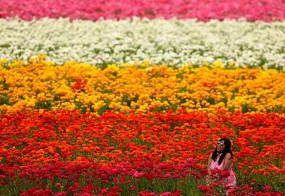 Как встречали весну в разных уголках мира