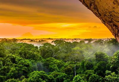 """Международный день лесов: названы 15 самых красивых лесов планеты <span class=""""color_red"""">- ФОТО</span>"""