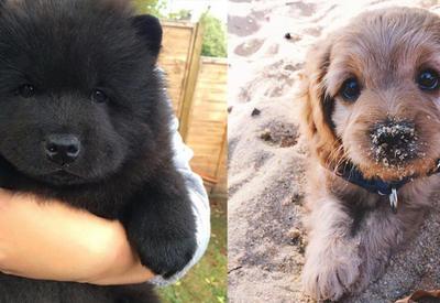 14 щенков, глядя на которых, вы обязательно захотите завести собаку