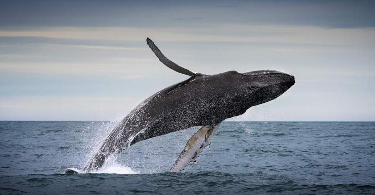Ученые показали Южный океан глазами кита