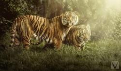 Животные с характером: серия работ Вики-Лии Болтер - ФОТО