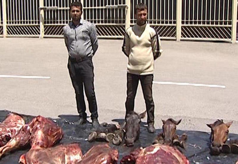"""В Азербайджане задержаны лица, продающие мясо мертвых и больных лошадей <span class=""""color_red"""">- ФОТО</span>"""