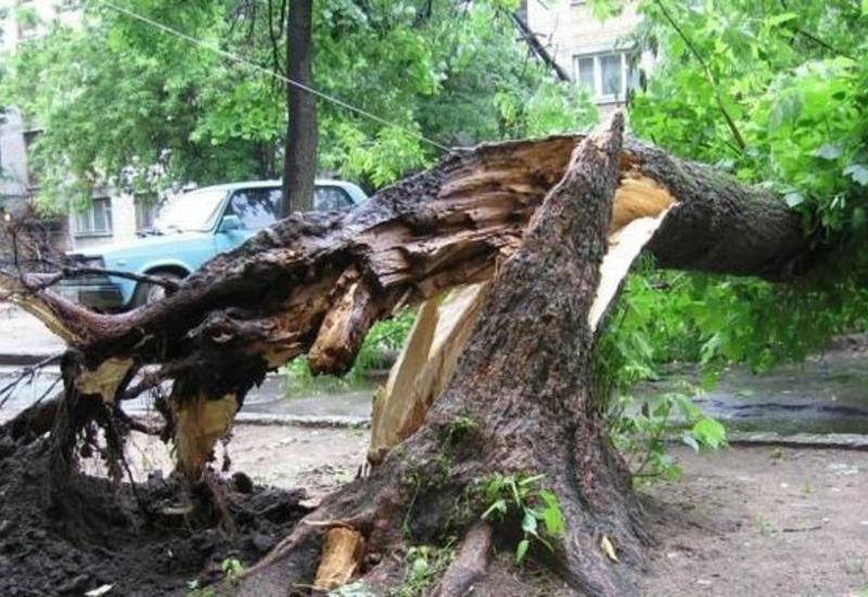 В Гяндже подростка убило дерево