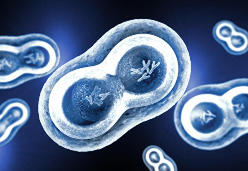 Биологи научились замедлять рост раковых клеток