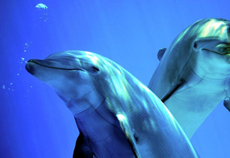 """В Одессе выбросило на берег десятки мертвых дельфинов <span class=""""color_red"""">- ФОТО</span>"""
