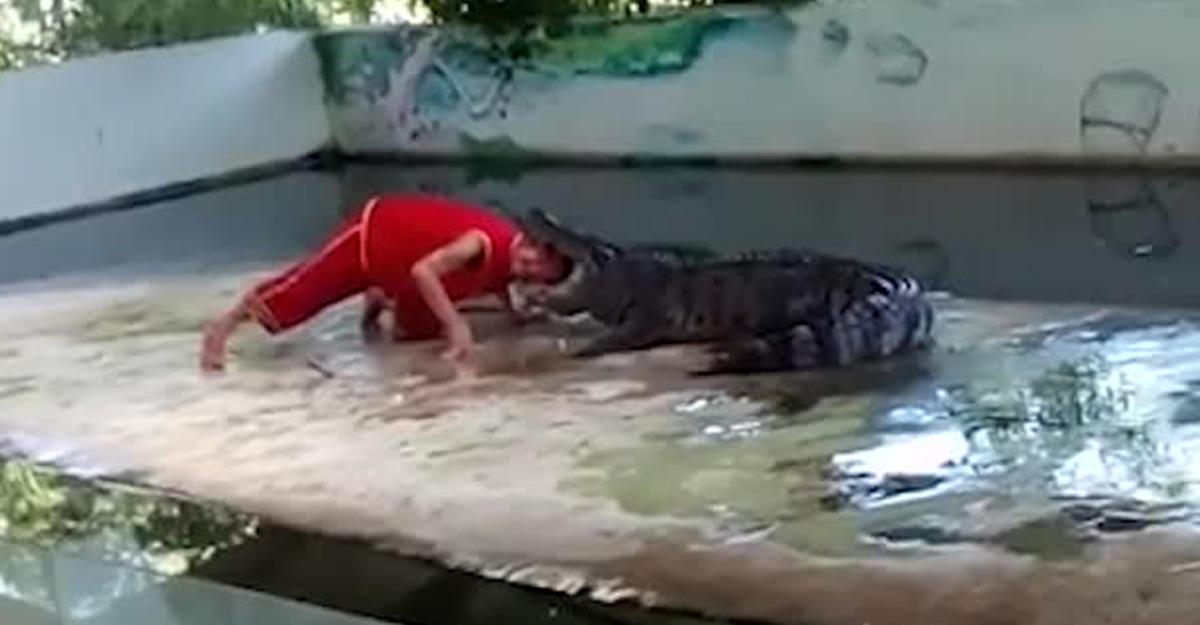 ВТаиланде крокодил прокусил голову дрессировщику