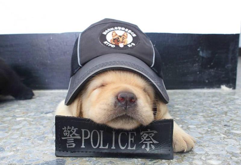 """В полиции Тайваня появились новобранцы, обезоруживающие очарованием <span class=""""color_red"""">- ФОТО</span>"""