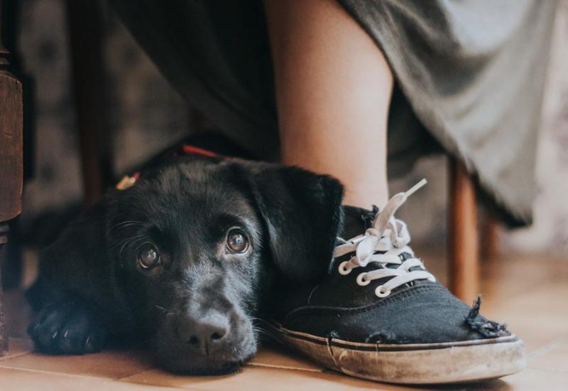 """Умилительные фотографии собак, победившие на фотоконкурсе Dog Photographer of the Year 2017 <span class=""""color_red"""">- ФОТО</span>"""