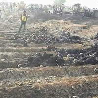 """148 человек погибли ужасной смертью в Пакистане <span class=""""color_red"""">- ОБНОВЛЕНО - ФОТО - ФОТО - ВИДЕО</span>"""