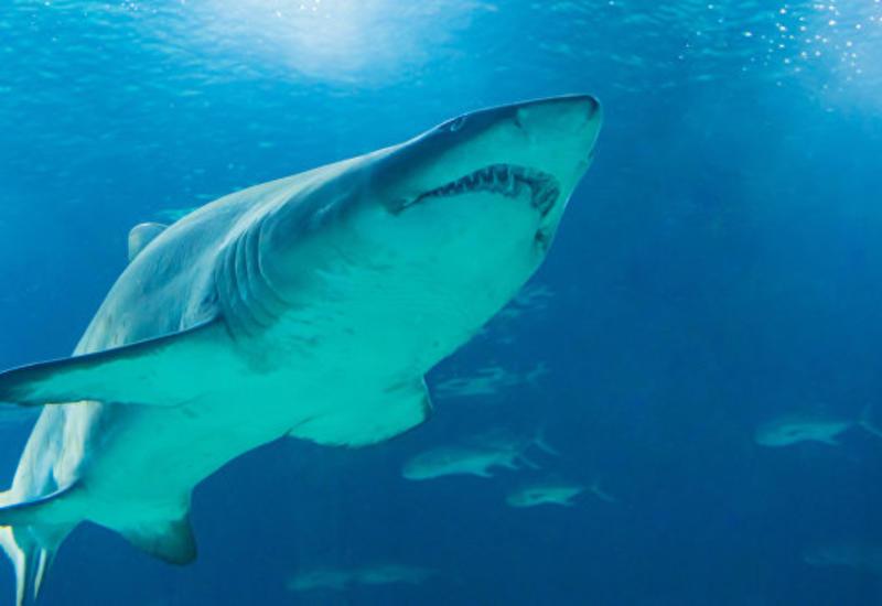 На Мальорке несколько пляжей эвакуировали из-за акулы