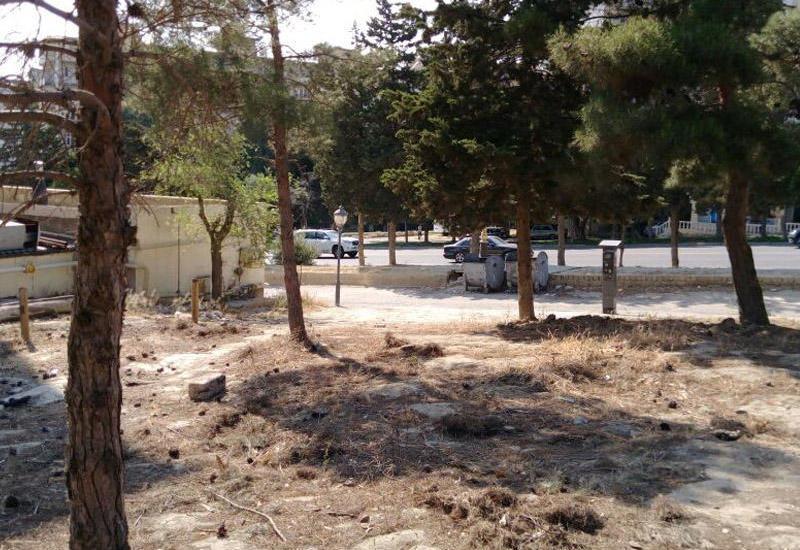 """В Баку выявлен факт незаконной массовой вырубки деревьев <span class=""""color_red"""">- ФОТО</span>"""