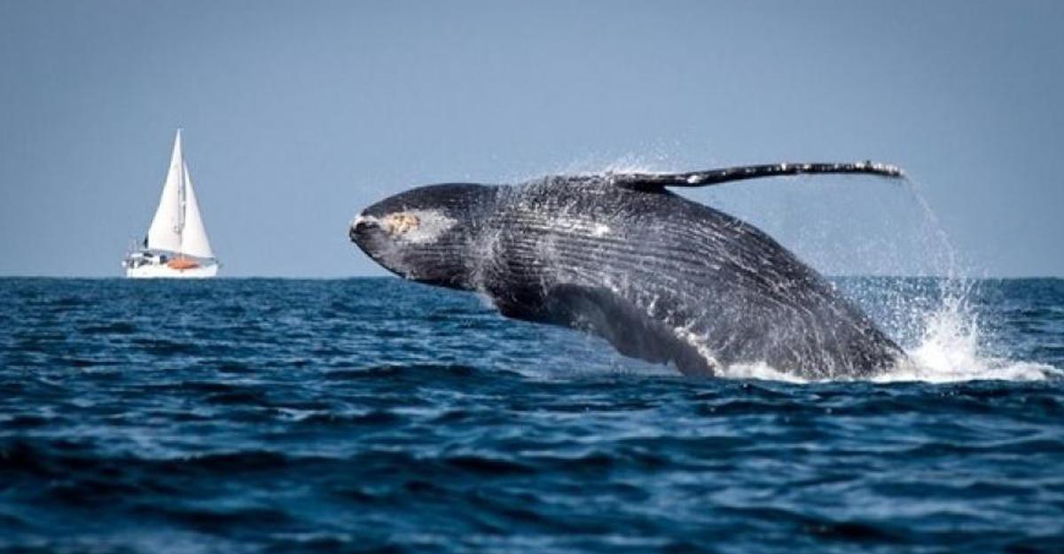 ВСША горбатый кит напугал рыбаков