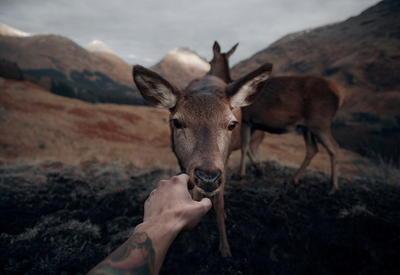 """Удивительная близость с природой: дикие животные Шотландии с очень близкого расстояния <span class=""""color_red"""">- ФОТО</span>"""