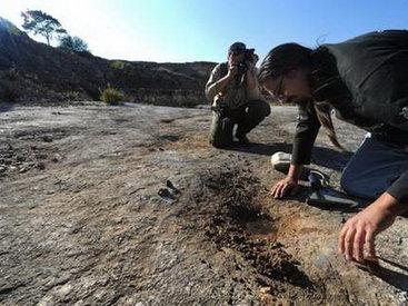 В Антарктиде нашли тонну останков динозавров