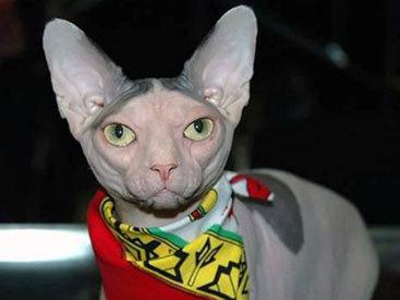 У москвички требуют выкуп за похищенного кота